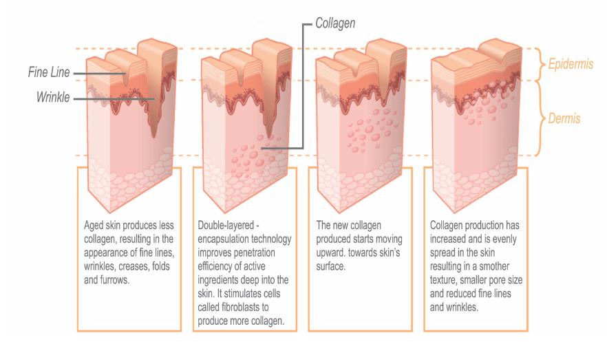 Mô phỏng sự hoạt động của tế bào da trước và sau khi bổ sung tế bào tăng trưởngEGF