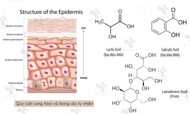 Da hoạt động theo quy luật sừng hóa và bong da tự nhiên tạo thành các tế bào chết trên da, nếu không lấy đi sẽ khiến da bị xỉn màu, khô ráp