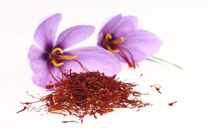 Thần dược nhụy hoa nghệ tây và cách sử dụng
